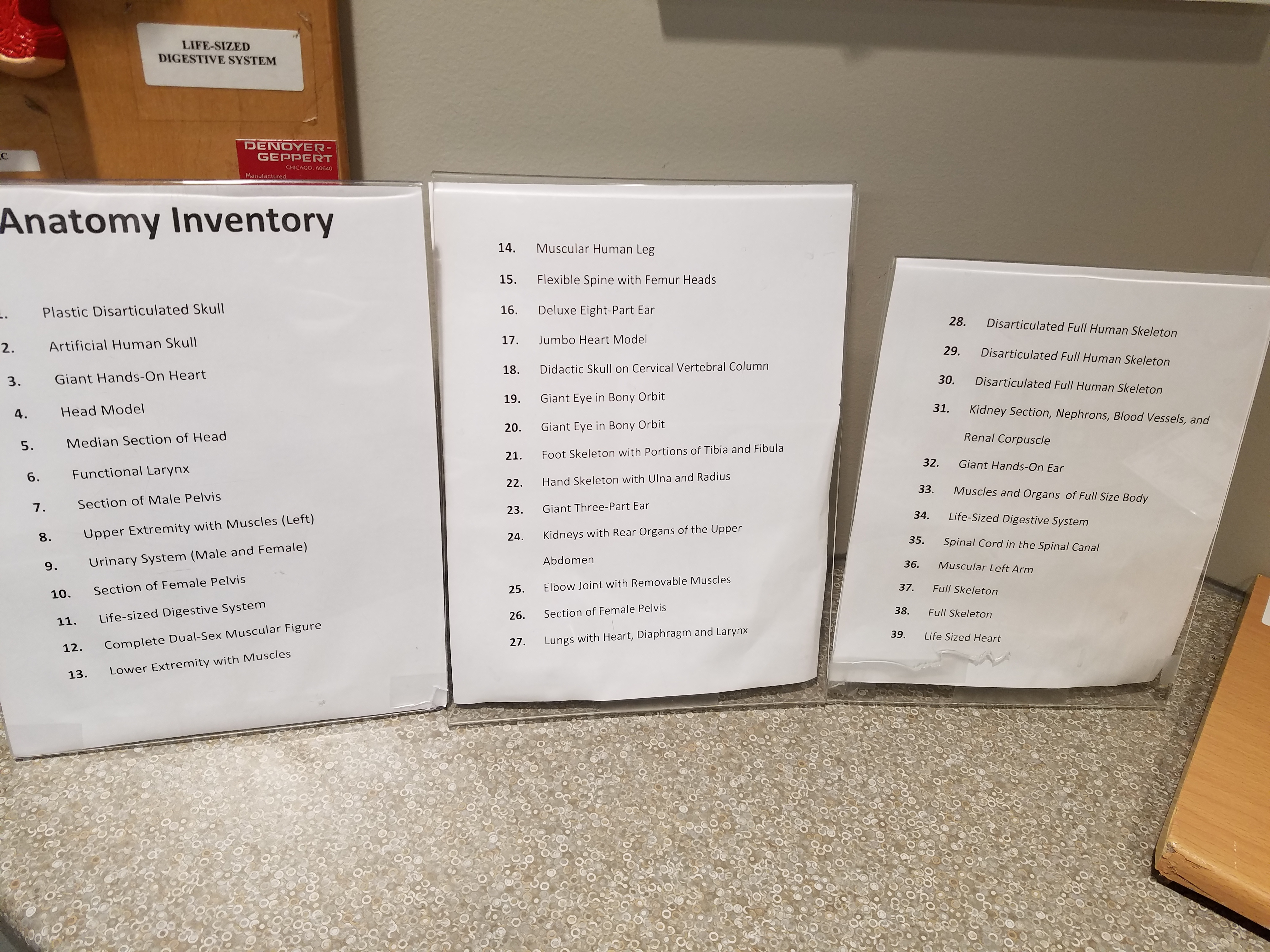 Anatomy room inventory list