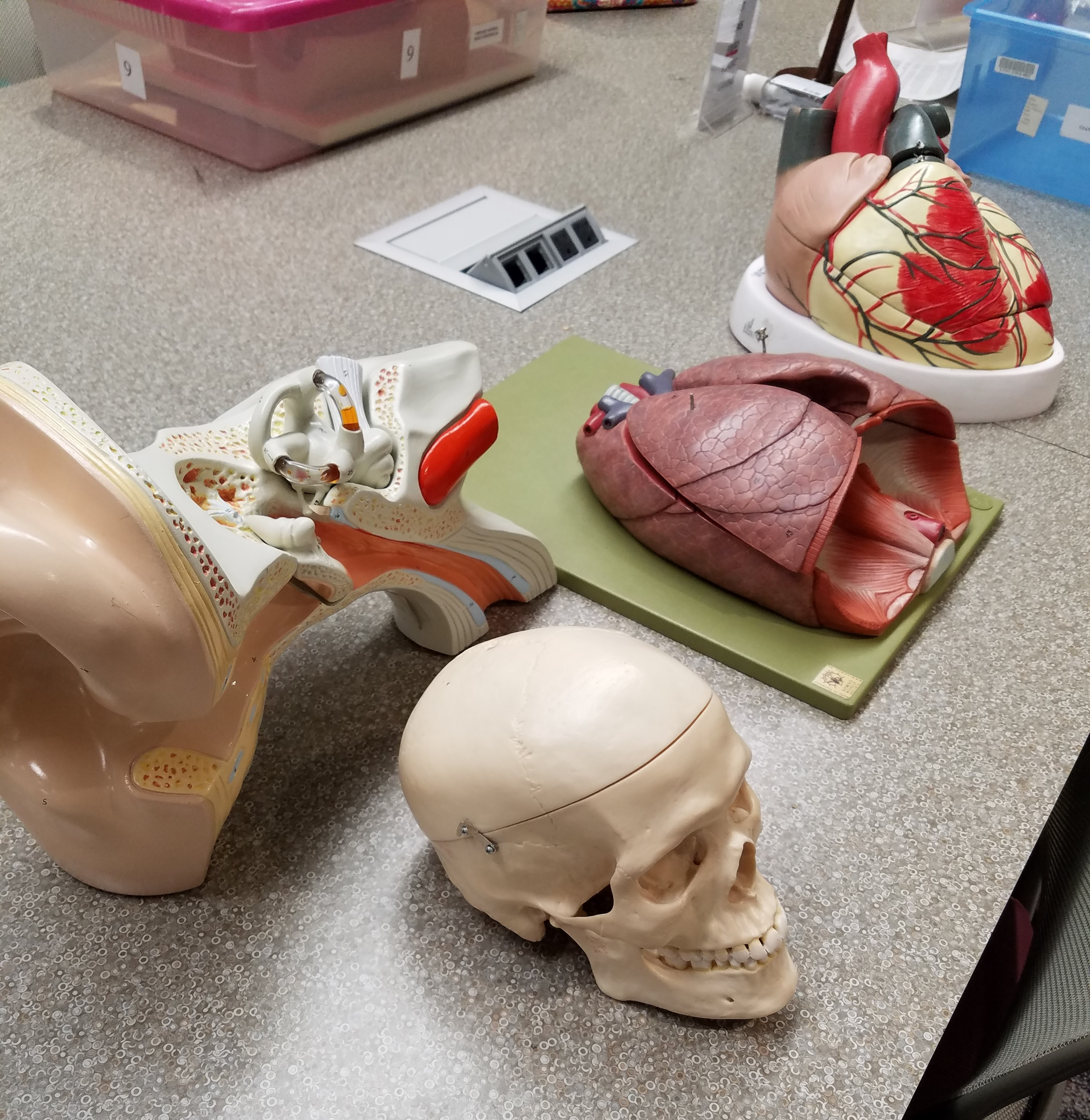 Anatomy room parts available