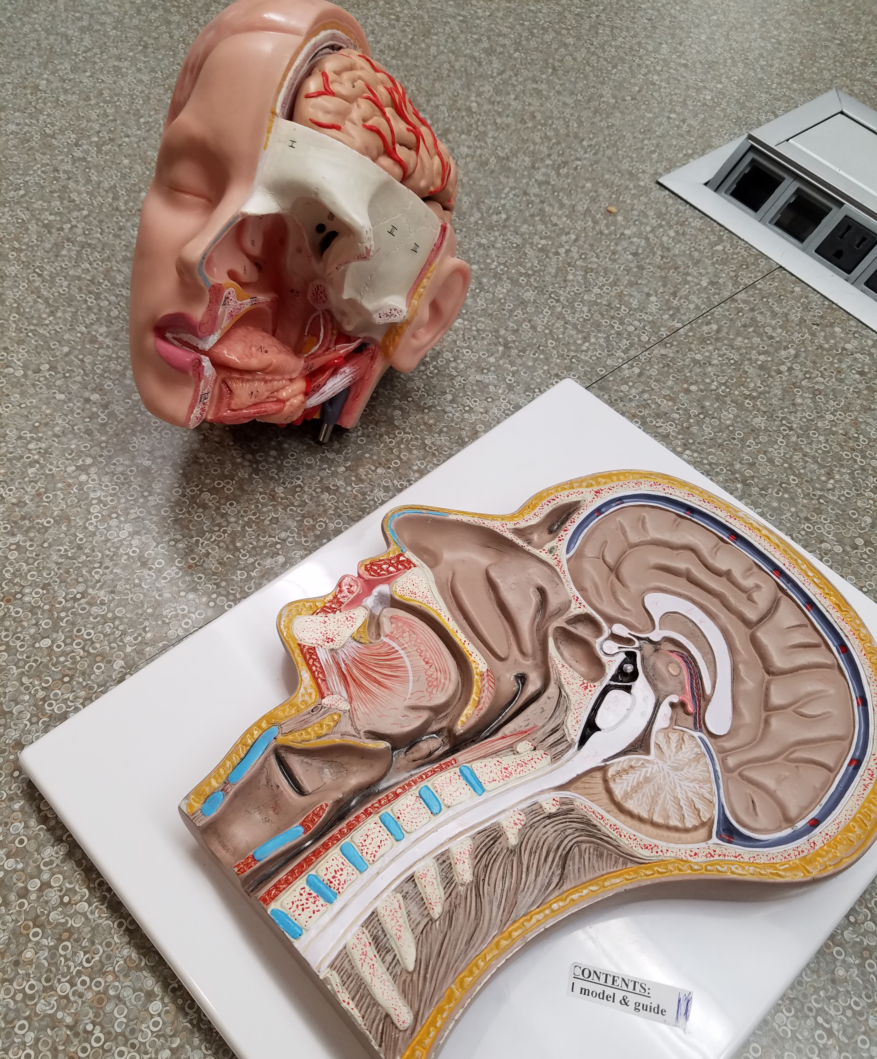 Anatomy room head part display